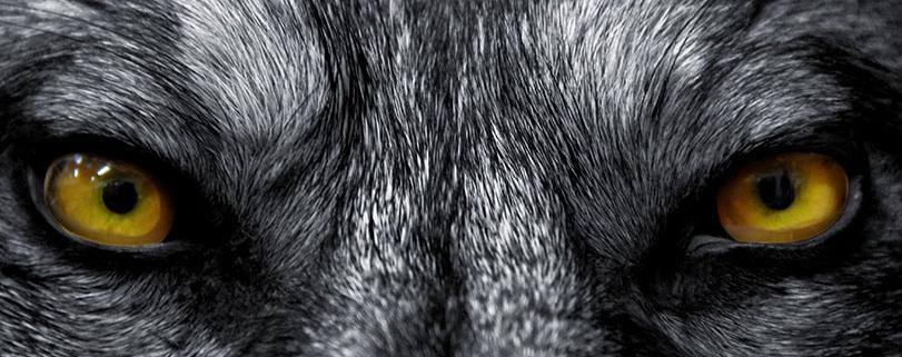 Wolf Eyes